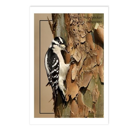 Downy WoodpeckerPostcards (Package of 8)