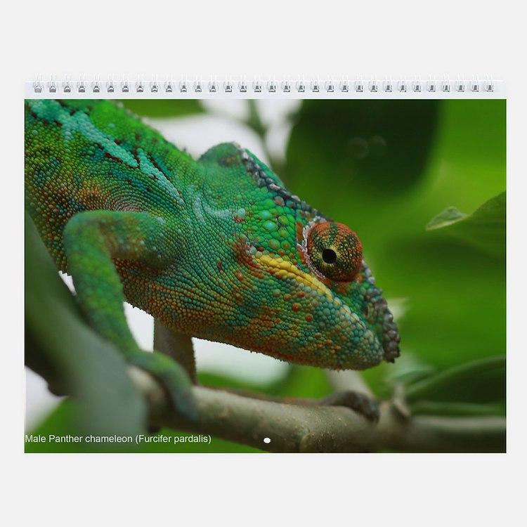 Chameleons of Madagascar 12-month Wall Calendar