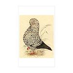 Tumbler Pigeon: Black Splash Rectangle Sticker 50