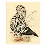 Tumbler Pigeon: Black Splash Small Poster
