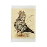 Tumbler Pigeon: Black Splash Rectangle Magnet (100