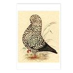 Tumbler Pigeon: Black Splash Postcards (Package of