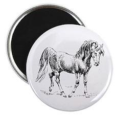 Arabian Drawing Graphite Art Horse Lover Magnet