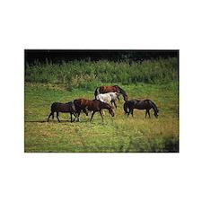 Freedom Spirit Wild Horse Lover Rectangle Magnet