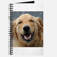 Mickey - Labrador - Photo 5 Journal