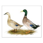 Ducks: Silver Welsh Harlequi Small Poster