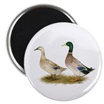 "Ducks: Silver Welsh Harlequi 2.25"" Magnet (10"