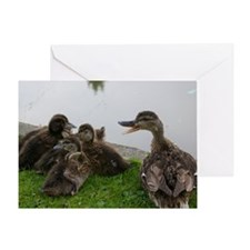 Ducks Greeting Card