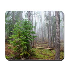 Pine tree forest Mousepad