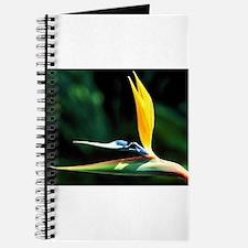 Flower 002 Journal