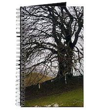 Avebury beech Journal