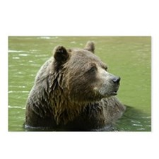 Grizzly Bear Postcards (Package of 8)