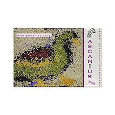 Ascanius 2007 Magnet