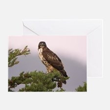 Red-tailed Hawk Single Greeting Card