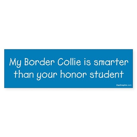 Border Collie / Honor Student