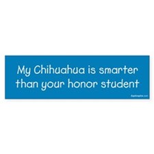 Chihuahua / Honor Student