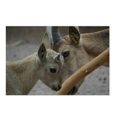 Goats Postcards (Package of 8)