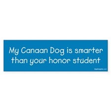 Canaan Dog / Honor Student