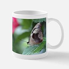 Grecian Shoemaker Butterfly Mug