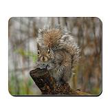 Squirrels Classic Mousepad