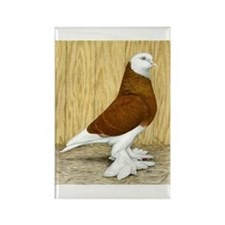 WOE Red Bald Pigeon Rectangle Magnet
