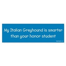 Italian Greyhound / Honor Student