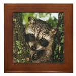 Baby Raccoon Framed Tile