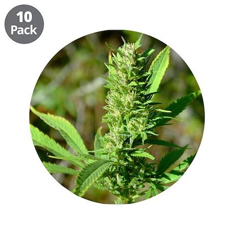 "Marijuanan plant (bud) 3.5"" Button (10 pack)"