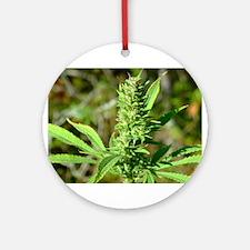 Marijuanan plant (bud) Ornament (Round)