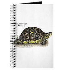 Florida Box Turtle Journal