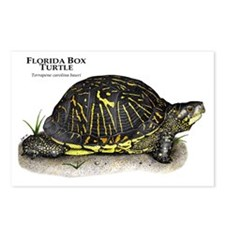 Florida Box Turtle Postcards (Package of 8)