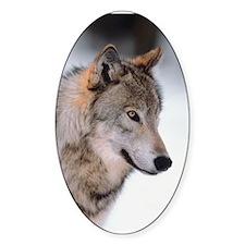 Photo Wolf Oval Sticker (10 pk)