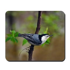 White-breasted Nuthatch Mousepad