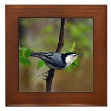 White Breasted Nuthatch Framed Tile