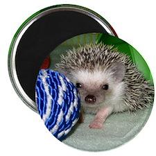 Victor Hedgehog Magnet