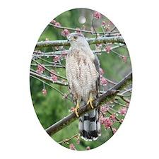 Cooper's Hawk Ornament (Oval)