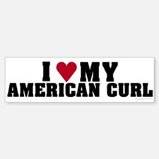I Love My American Curl