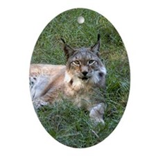 Siberian Lynx Oval Ornament