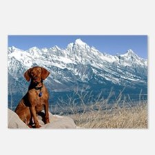 Vizsla in the Tetons I Postcards (Package of 8)