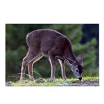 Little Fawn Postcards (Package of 8)