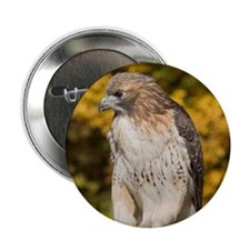 Red Tail Hawk Button