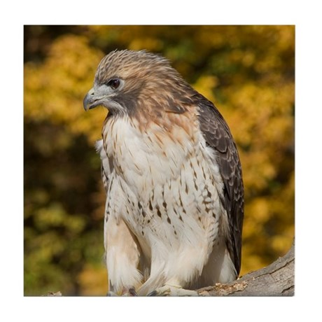 Red Tail Hawk Tile Coaster