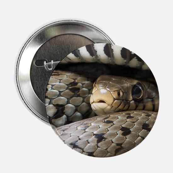 """Snake 2.25"""" Button"""