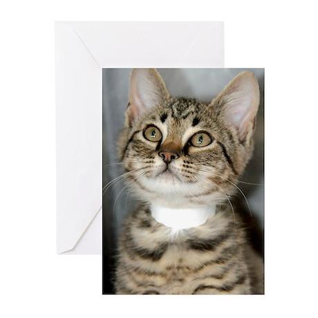 Tabby Kitten Greeting Cards (Pk of 10)