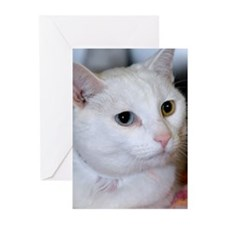 All-White Cat Greeting Cards (Pk of 10)