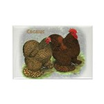 Cochins Golden Laced Rectangle Magnet (100 pack)