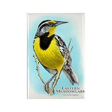 Eastern Meadowlark Rectangle Magnet