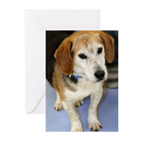 Senior Beagle Photo Greeting Cards (Pk of 20)