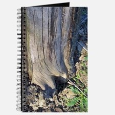 Gnarled Apple Tree Trunk Journal