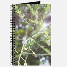Wild Asparagus Journal